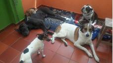 Guardería Canina/mascotas / Paseadores/paseo Para Perros