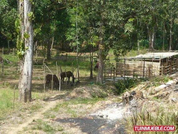 Haciendas - Fincas En Venta Higuerote Fm A8