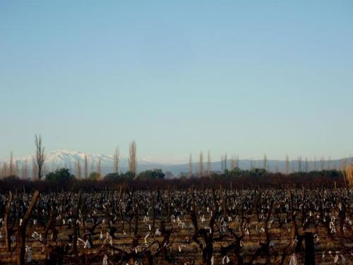 Imagen 1 de 24 de Finca Organica En  San Rafael, Mendoza , Ideal Inversor!!