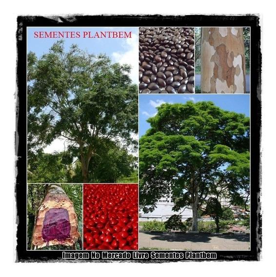 Sementes De Pau Ferro E Pau Brasil Kit P/ Mudas Árvores Flor