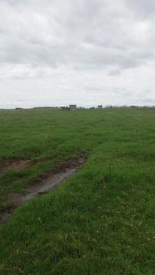 Fazenda 120 Ha 25 Km Lavras Do Sull, Prazo 4 Anos Para Pagar. - Fa0010