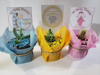 Recuerdos Baby Shower Plantas Suculentas Decoradas