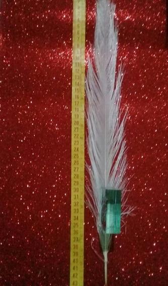 Plumas De Avestruz $70 40cm A 70cm Venta Por Unidad Y Por Kg