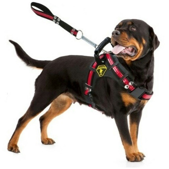 Peitoral Coleira Guia Canil Com Regulagem Para Cachorro Cão