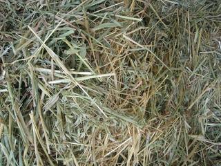 Heno De Avena Y Heno De Alfalfa Organico Pack 2 Bolsas