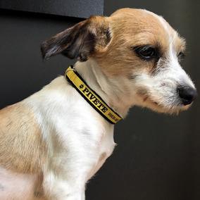 Coleiras De Identificação Personalizada Para Cães Pequenos