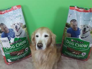 Perrarina Purina Dog Chow 23kg Comida Para Perros Adultos