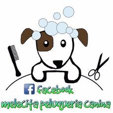 Peluqueria Canina Profesional A Domicilio Palermo Capital