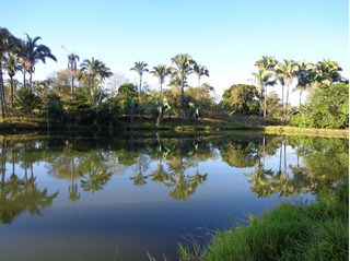 Fazenda A Venda Em Januaria Estado Minas Gerais ( Cod 4035)