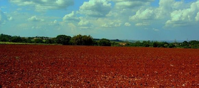 Fazenda Em Ipixuna - Pará, P/ Pecuária - 154
