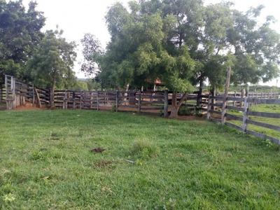 Fazenda A Venda Em Terenos - Ms (pecuária) - 900