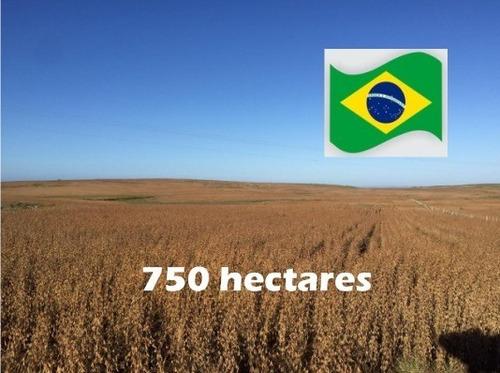 Fazenda Com 750 Hectares Em Santa Margarida Do Sul - Rs