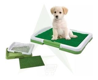 Pack 3 Baño Ecológico Para Mascotas Perros Puppy Potty Pad
