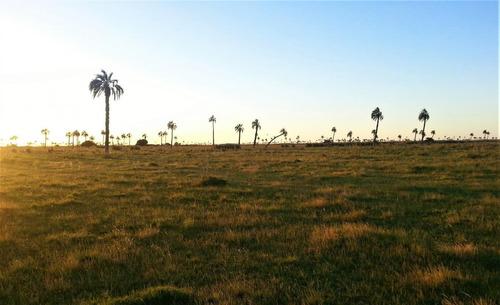 Campo Ganadero En San Luis, Rocha