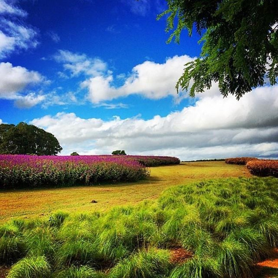 Fazenda Em Sorocaba - Te0107