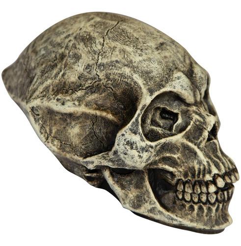 Imagen 1 de 1 de Decorativo De Látex Cráneo Alien Skull Decoración Halloween