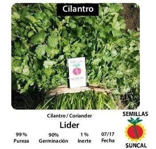 Suncal- Semilla De Cilantro