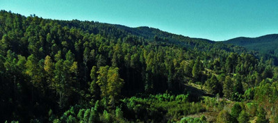Terreno Con Hermoso Bosque Nativo, 10 Hectáreas.
