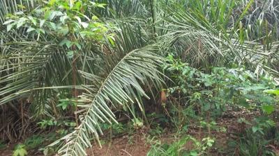 Fazenda A Venda Em Araguacema - To,( Dupla Aptidão ) - 515