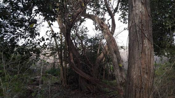 Lotes En Barrio Ecológico Único Cerca De La Plata Y Ruta 2