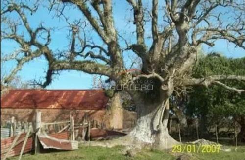 Campo Ganadero En Venta  Rocha,  Zona De Castillos- Ref: 26231