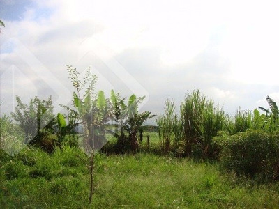 Chacara/fazenda/sitio - Centro - Ref: 184712 - V-184712