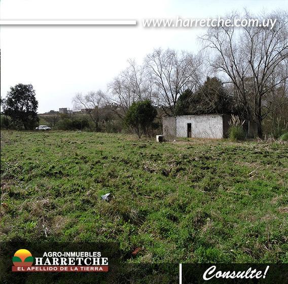 Vendo Chacra De 3 Has Melilla Inmobiliaria Harretche