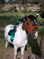 Renta De Ponys Y Granja Didactica