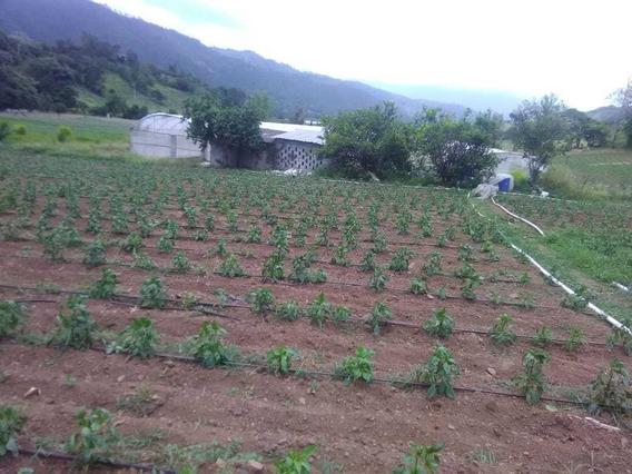 Finca De 1400 Tareas Agrícola En San José De Ocoa