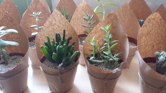 Souveniers - Regalos - Cactus Crasas Maceta N°6