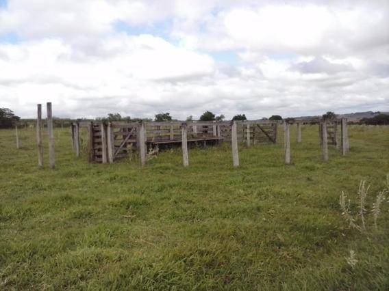 Sítio Em Zona Rural, Bilac/sp De 0m² À Venda Por R$ 970.000,00 - Si82499