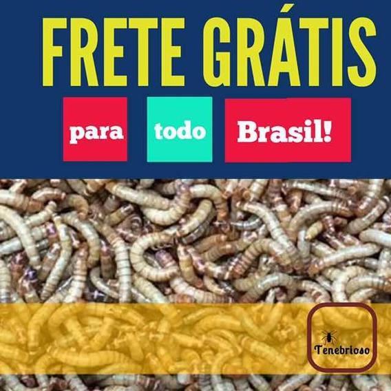100 Larvas Insetos Tenébrio Molitor - Frete Grátis Br