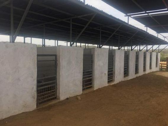 Granja En Venta En Pueblo Nuevo. Paraguana