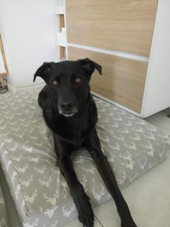 Pancho En Adopcion / Perro En Adopcion
