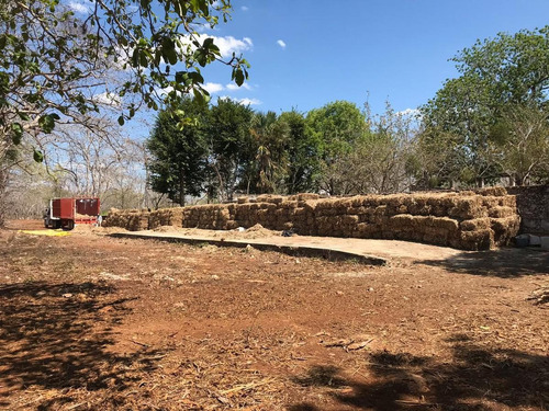 Imagen 1 de 12 de Rancho En Venta Sotuta Yucatan, Compralo A 18 Meses Sin Intereses.