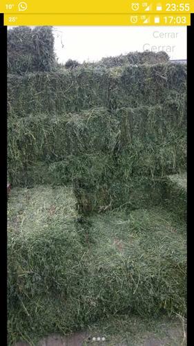 Imagen 1 de 1 de Fardos Alfalfa Venta Con Factura Oficial