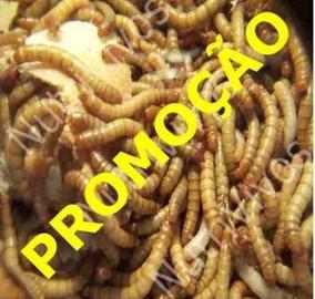 1000 Larvas De Tenebrio Molitor Vivas 1,5cm A 2,5cm