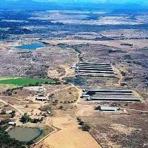 Granja Avicola,ganado Carora ,en Produccion Venta Finca