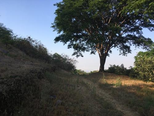 Terreno En Venta Con Plantación De Aguacate En Colima