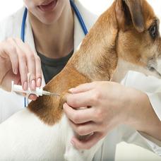 Chip De Identificación Perros Y Gatos Pethome Chile