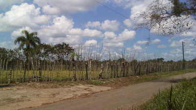Coalición Vende 2000 Tareas En Monte Plata Para Ganado