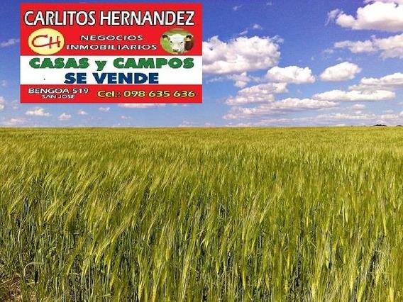 Soriano Necesitamos Campos P Arrendar Se Ofrece Garantia