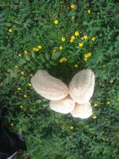 35 Esponjas Vegetales Naturales-envío Incluido