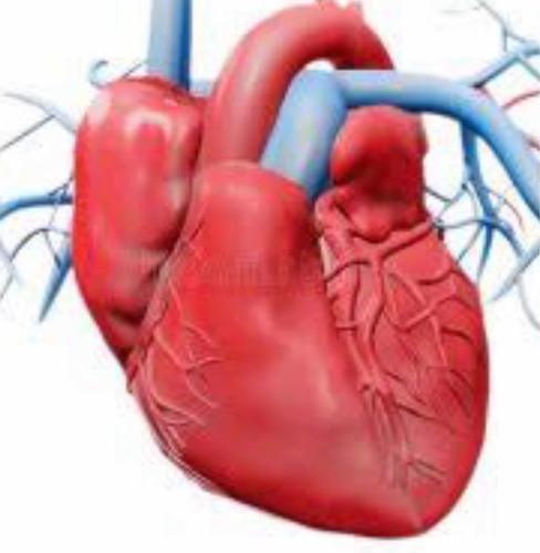 Imagem 1 de 1 de Consultas Cardiologia Via Vídeo E Laudos De Exames Para Clin