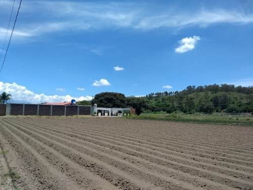 Venta Terreno Ideal Para Cultivo