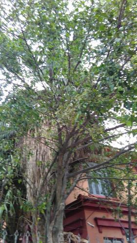 Terreno - Partenon - Ref: 396243 - V-pj3764