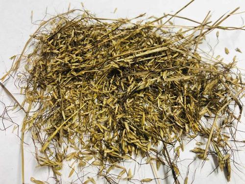 Semillas Pasto Angleton Climacuna Bolsa X 1.000 Grs