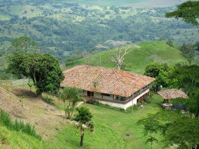Venta De Finca Ganadera 150 Cuadras Cartago Valle