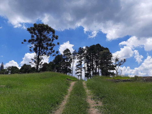 Imagem 1 de 13 de Projeto Em Andamento, Compre Seu Terreno Em São Roque-sp