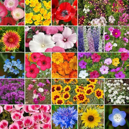 400 Sementes De Flores Sortidas  Abelhas Borboletas Pássaros